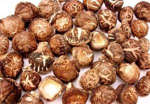 야생의 버섯